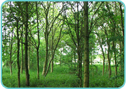 Young Woodland Habitat